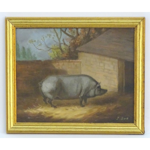 721 - Attrib. J Box, XX,  Oil on canvas laid on board,  A portrait of a prize pig in a sty. Signed lower r...