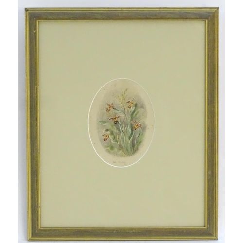 38 - Albert Durer Lucas (1828-1918),  Watercolour, an oval, A study of flowers, Bee Orchids,  Signed, tit...