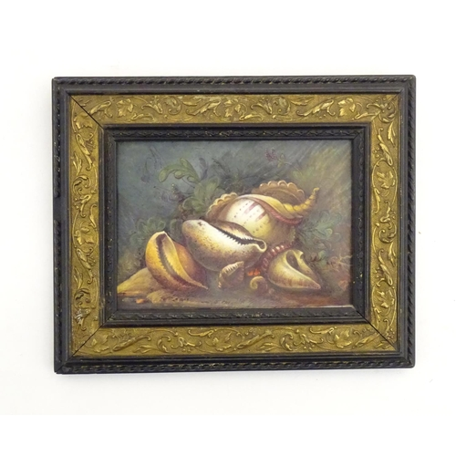 97 - A Derby porcelain plaque with a hand painted still life study of shells. Ascribed Hawton verso. Appr...
