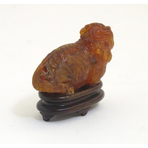 1006 - An Oriental carved amber model of a guardian lion / shishi. Approx. 1