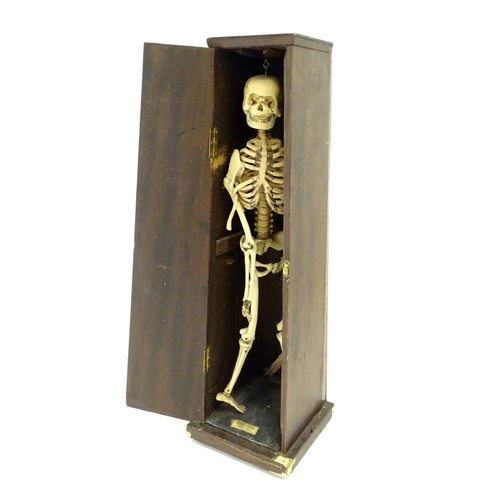 1234 - An early 20thC anatomical model skeleton, by Educational and Scientific Plastics Ltd. Contained with...