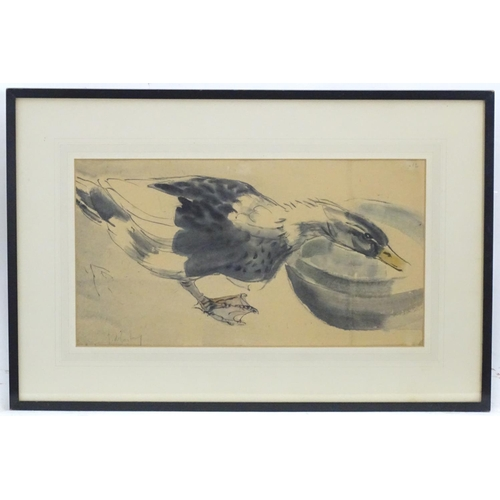 """Germaine de Coster (1895-1992), French School, Colour wash and ink, A duck drinking from a bowl. Signed lower left. Collector's label verso for A. Chester Beatty. Approx. 9 3/4"""" x 17 3/4"""""""
