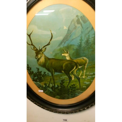 709 - A pair of oval framed and glazed stag prints...