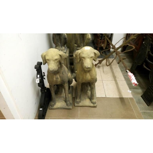 711 - A super pair of churchstone pointers...