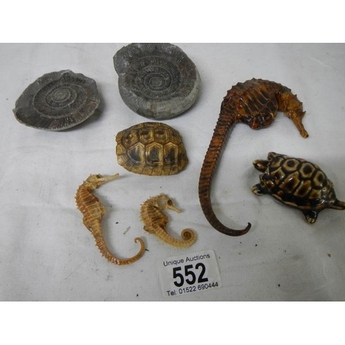 552 - A mixed lot including antique dried taxidermy sea horses, tortoise shell and old fossil....