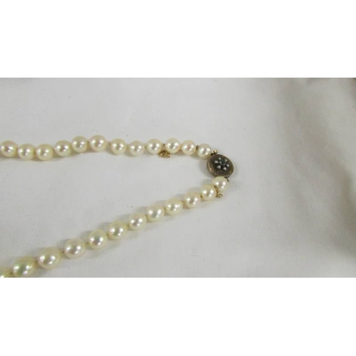 50 - A long strand of pearls with gold clasp....