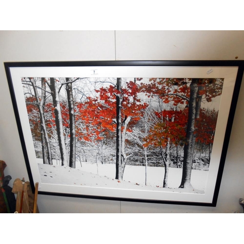 7 - A large Framed and glazed print of trees titled 'Snowfall' by Burney Lieberman 105cm x 75cm collect ...