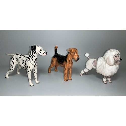 155 - A Royal Doulton Airedale Terrier HN1023, a Dalmation HN1118 and a medium French Poodle HN2631...