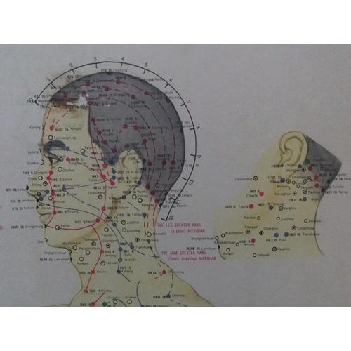 227 - 3 large, vintage Dutch, acupunture diagram posters,  All measure 83 x 39 cm...