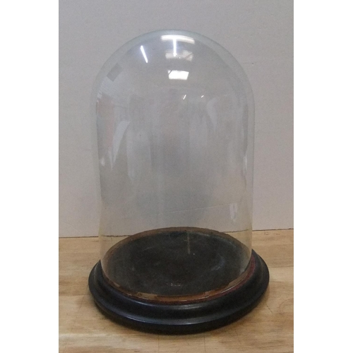 181 - Victorian glass dome with ebonised wooden plinth  36cm high x 25cm wide...