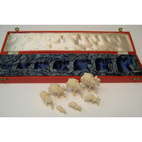 182 - stunning boxed antique set of 7 graduating sized carved ivory camels in original red box, circa 1900...
