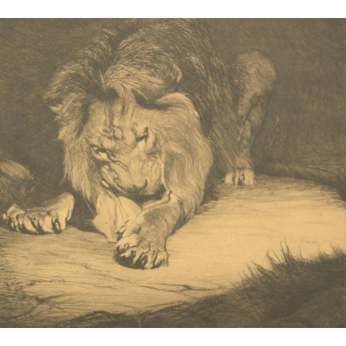 367 - Warwick Reynolds (1880-1926) pencil signed etching of a Lion, pencil signed, framed  23 x 25 cm...