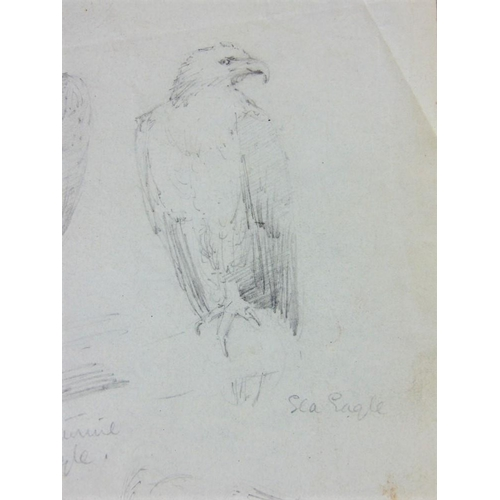 657 - Attributed to Edward Lear (British 1812-1888) - A sheet of pencil drawings of a sea eagle and two Vu...
