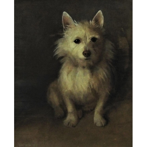 679 - Samuel Fulton (Scottish 1855-1941) - Study of a seated white Scottish terrier,(Cairn or West Highlan...