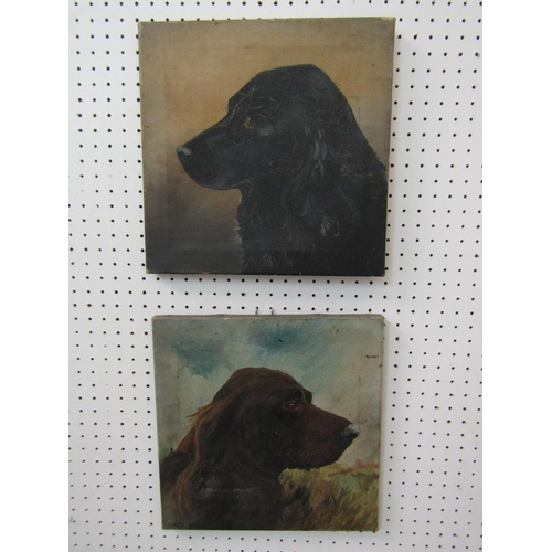 H Booth (early 20th century school) - a pair of studies of dogs heads - A brown spaniel and a black retriever, oil on canvas, both signed and dated 1923? 31 x 30cm approx, unframed (pair)