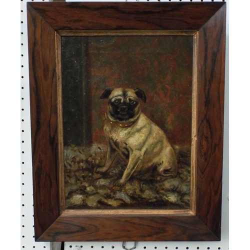348 - Alice M W Adye (British late 19th century school) - Study of a seated Pug in an interior setting, oi...