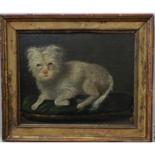 351 - 19th century school study of a recumbent white terrier on a green cushion, oil on board, unsigned, 2...