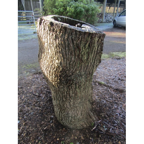 1958 - Oak stump 105 cm high...