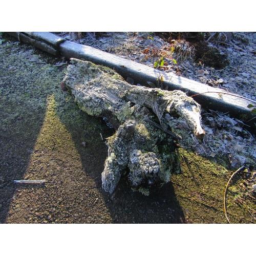 1963 - Oak log 120 cm long...