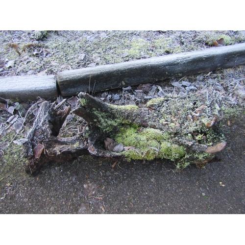 1964 - Oak log 110 cm long...