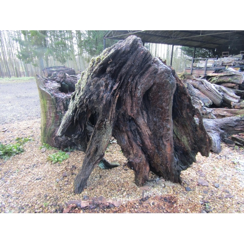 1981 - Oak stump 90 cm wide...