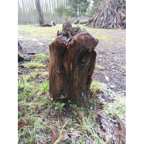 1982 - Oak stump 70 cm long...