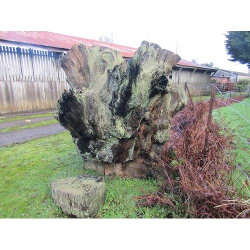 1988 - Large oak stump 200 x 200 cm...