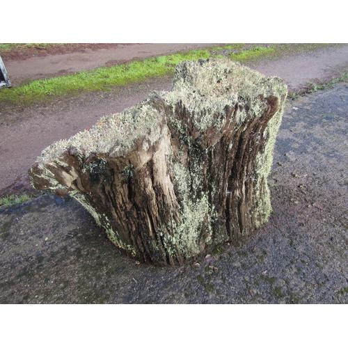 1989 - Oak stump 110cm...