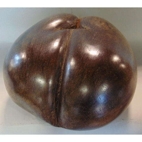 635 - Good Coco De Mer nut with hair, 27cm long