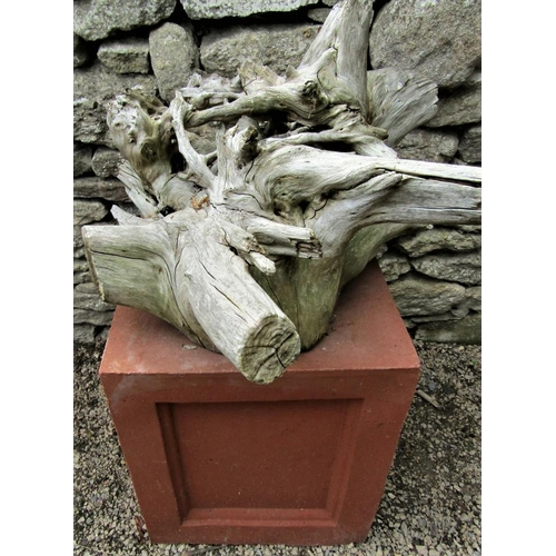 49 - A dried and weathered root sculpture raised on a terracotta coloured plinth, 70cm high overall, the ...