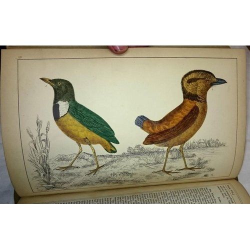 213 - A History of The Earth and Animated Nature by Oliver Goldsmith, complete in 2 vols with numerous col...