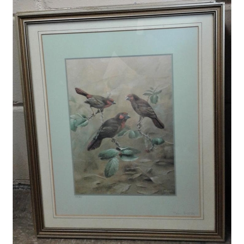 369 - Set of Four Bird Interest Pictures with Gilt Frames, c.17 x 20in...