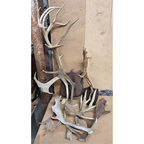 156 - Collection of Various Deer Antlers...