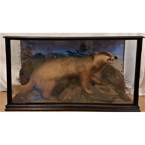 162 - 19th Century Natural History Specimen - Badger on a Rocky Landscape with an ebonised display case - ...