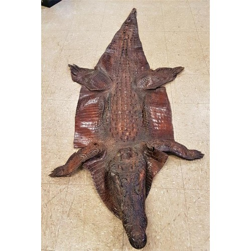 165 - Late 19th early 20th Century Alligator Skin - fully intact - 85ins long...