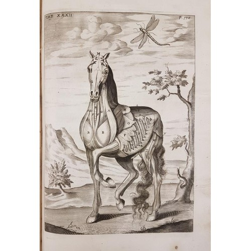 9 - Horses: Snape, Andrew <em>The Anatomy of an Horse</em>. London, 1687 folio, 42 (of 49) fine engraved...