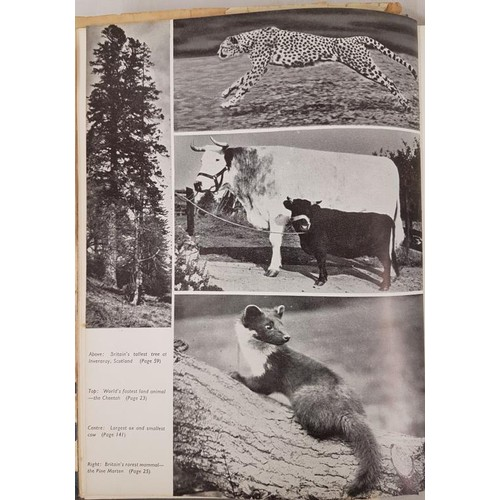 39 - Collectable edition<em> Guinness Book of Records 1956,</em> the second edition of the fa...