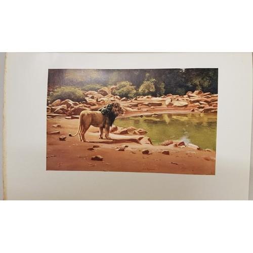 14 - Abel Chapman.<em> Retrospect, Reminiscences and Impressions of a Hunter-Naturalist in three continen...