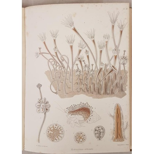 121 - The Ray Society. 1872. Folio. Colour botanical plates. Fine binding. Fine half calf. Book plates...