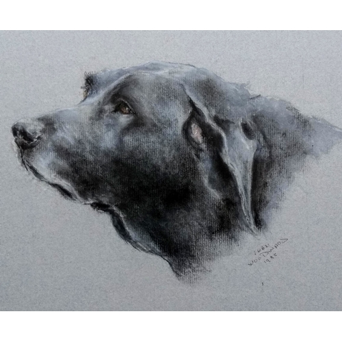 43 - Indistinctly signed, CANINE PORTRAIT, print, framed and mounted, 36 x 30 cm...