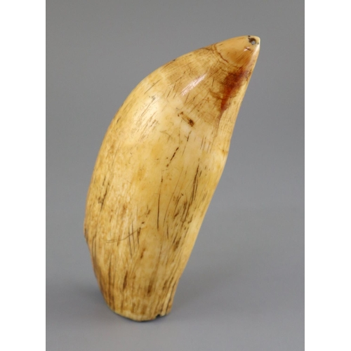20 - <B>A 19th century South Seas sperm whale tooth tabua, 19th century,</b></i> with pierced holes to ea...