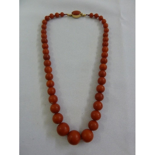 288 - A late 19th century graduated coral necklace with gold and coral clasp...