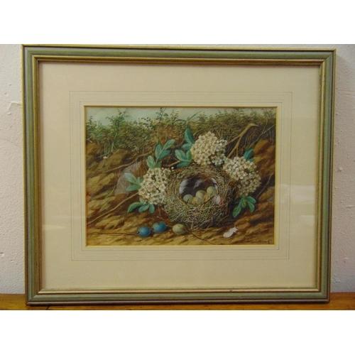 66 - W. Cruckshank 1848-1922 framed and glazed watercolour of a birds nest, signed bottom right, 20 x 27c...