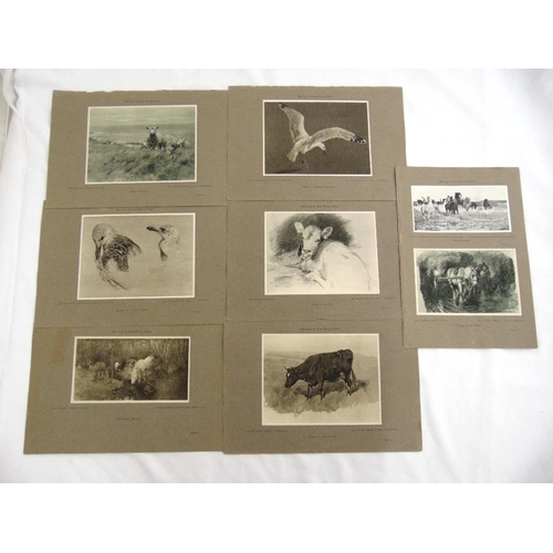 33 - Lucy Kemp-Welch R.B.A seven lithographic prints from the original collection of pictures...