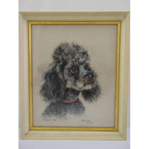 42 - Marjorie Cox framed and glazed charcoal and pastel drawing of a poodle titled Sam 1958, signed botto...