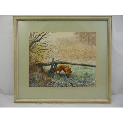 43 - Daphne Baxter framed and glazed watercolour of a fox, signed bottom left, 34 x 41.5cm...