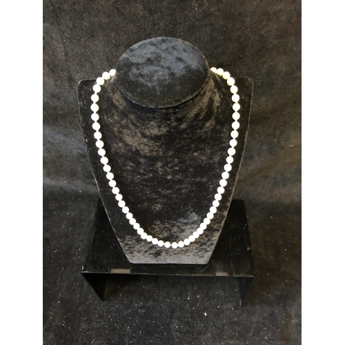 31 - A string of Rosita pearls with marcasite floret chromium clasp, 47cm long approx....