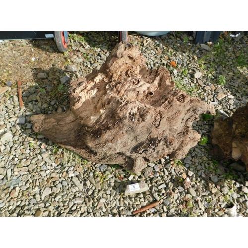 6 - Large piece of bogwood...