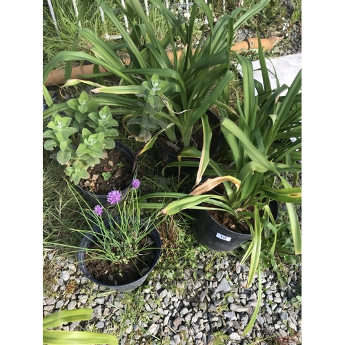 10 - Various potted plants...
