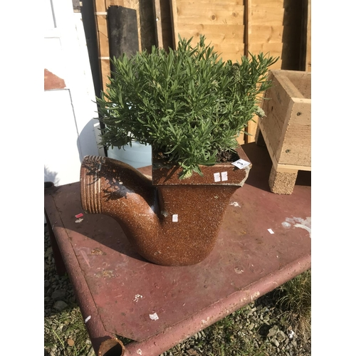 3 - Vintage soil pipe planter with lavender...
